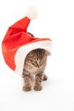 Katt som klibbas på jultomten hatt på vit Fotografering för Bildbyråer