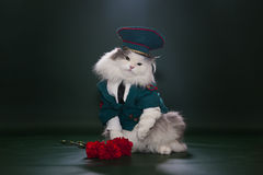 Katt som kläs som General Arkivfoton