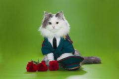 Katt som kläs som General Fotografering för Bildbyråer
