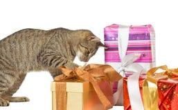 Katt som kontrollerar julklappar Arkivbild