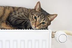 Katt som kopplar av på ett varmt element arkivbilder