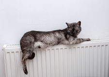 Katt som kopplar av på ett varmt element royaltyfri bild