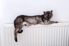 Katt som kopplar av på ett varmt element royaltyfria foton