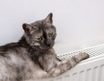 Katt som kopplar av på ett varmt element arkivbild