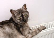 Katt som kopplar av på ett varmt element arkivfoton