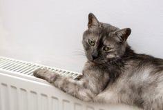 Katt som kopplar av på ett varmt element royaltyfria bilder