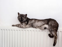 Katt som kopplar av på ett varmt element royaltyfri fotografi