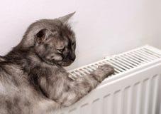 Katt som kopplar av på ett varmt element arkivfoto