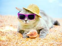 Katt som kopplar av på stranden Arkivbild