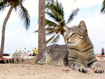 Katt som kopplar av på strandkeniaen Fotografering för Bildbyråer