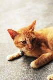 Katt som krullas upp på golvet Royaltyfri Fotografi