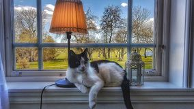 Katt som lägger i Windows Royaltyfri Fotografi