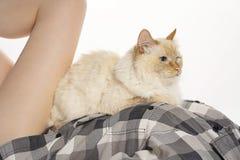 Katt som lägger mellan en kvinnas nakna ben på vit bakgrundskonst royaltyfria foton