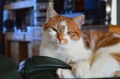 Katt som lägger på en soffa royaltyfria bilder