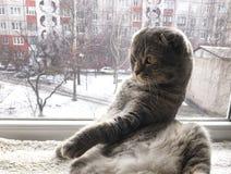 Katt som lägger på fönstret closer royaltyfri fotografi