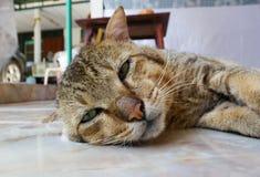 Katt som lägger på golv Arkivbild