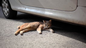 Katt som lägger under den smutsiga bilen royaltyfria bilder