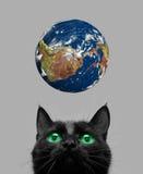 Katt som leker med jord Arkivbild