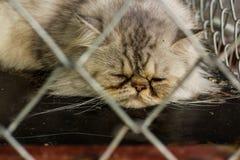 Katt som ligger i burar Arkivfoton