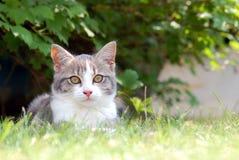 Katt som ligger i det trädgårds- gräset Arkivfoton
