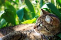 Katt som ligger i gräs arkivbild