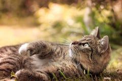 Katt som ligger i gräs och ser upp fotografering för bildbyråer
