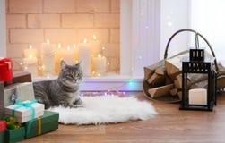 Katt som ligger nära den dekorerade spisen Royaltyfria Bilder