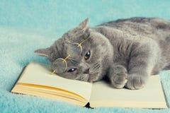 Katt som ligger på boken Arkivbilder