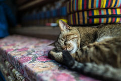 Katt som ligger på brädena Royaltyfri Foto