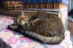 Katt som ligger på brädena Arkivbild