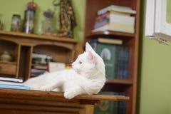 Katt som ligger på byrån Royaltyfri Fotografi