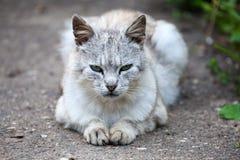 Katt som ligger på den trädgårds- banan Royaltyfri Foto