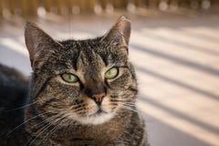 Katt som ligger på en balkong som poserar till ett foto Arkivbilder