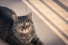Katt som ligger på en balkong som poserar till ett foto Royaltyfri Bild