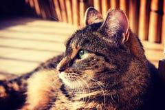 Katt som ligger på en balkong som poserar till ett foto Karaktärsteckning foto för hög kontrast Royaltyfri Bild