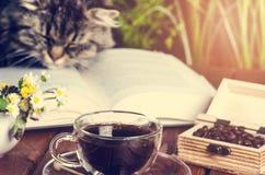 Katt som ligger på en bok och en sömn anhydrous roliga husdjur litteratur fotografering för bildbyråer