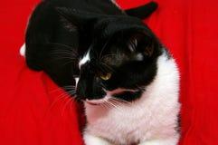 Katt som ligger på en säng Arkivbild