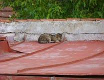 Katt som ligger på ett tak Arkivbilder