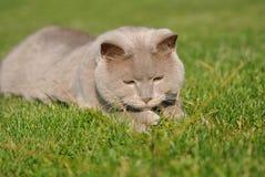 Katt som ligger på gräs Arkivfoto