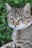 Katt som ligger på grönt gräs Arkivfoton