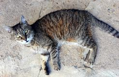 Katt som ligger på jordningen royaltyfria bilder