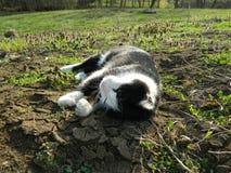 Katt som ligger på jordningen Royaltyfria Foton