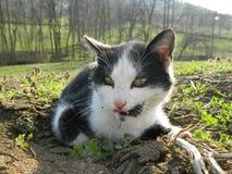 Katt som ligger på jordningen Arkivfoton