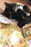 Katt som ligger på mattan med ukrainska pengar Royaltyfri Fotografi