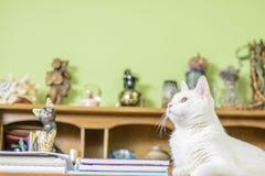 Katt som ligger på skrivbordet Fotografering för Bildbyråer