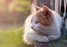 Katt som ligger på solljus Arkivfoton