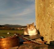 Katt som ligger på stenar i övergett hus royaltyfri foto