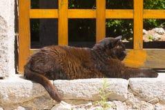 Katt som ligger på stenhuggeriarbetet arkivfoton