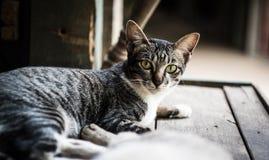 Katt som ligger på tabellen fotografering för bildbyråer