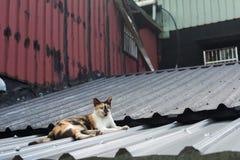 Katt som ligger på taket Royaltyfri Bild